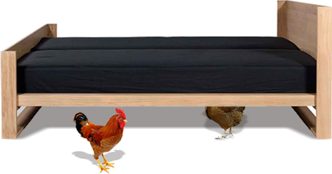 chicken-under-bed
